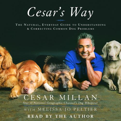 I Rehabilitate Dogs I Train People