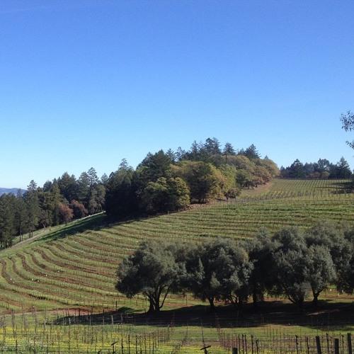 Explore Napa's Spring Mountain Stu Smith of Smith-Madrone: