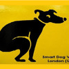 Smart Dog Video London (UK)