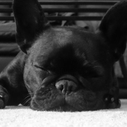 EDHID DOG MIXES