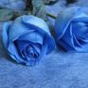 Dj ElsoQ - Dj Khang Chjvas Ft Nhu Quynh - One Million Scartlet Roses
