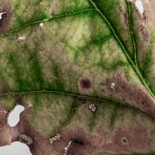 Leaves (2014)