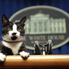 15 - The Presidents Of The United States Of America - Kitty