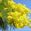 Canzone per Pàmela in occasione della lieta ricorrenza dell'otto di marzo
