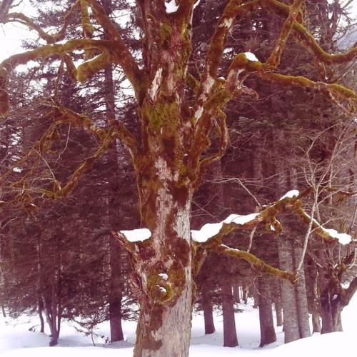 Winterreise With No Memory
