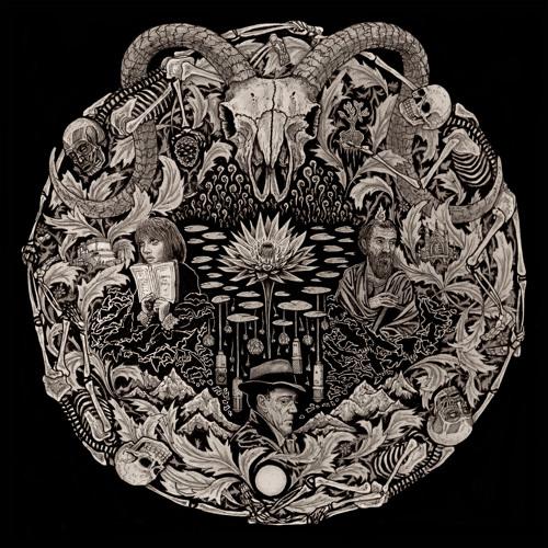Petrels - Orpheus