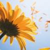 바람, 꽃을 만나다