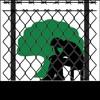 Qeerroo FDG (Warraaqsa Bilisummaa Oromoo)