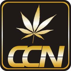 CCN #7