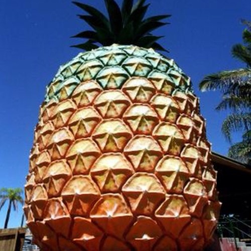 meet her at the big pineapple festival