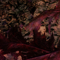 Sonitus Aurium - Odjinud