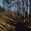 Zoran - Dream Forest Hypnosis