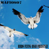 Birds Flying High Freestyle