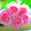 أوان الورد ... خالد حماد
