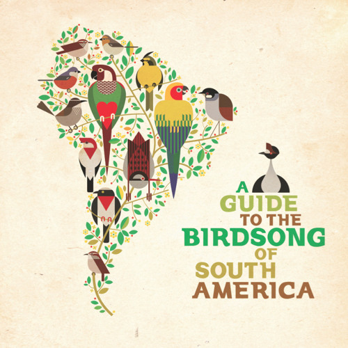 Gallineta Chica (A guide to the birdsong of Southmerica)