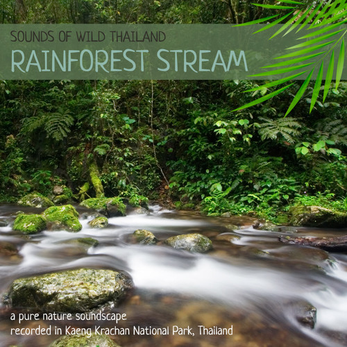 Sounds of Wild Thailand IV: Rainforest Stream