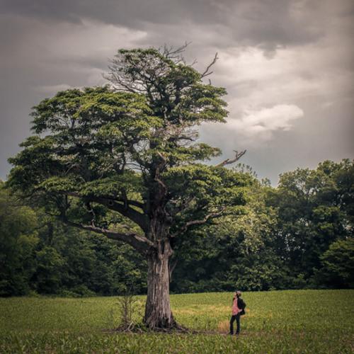 Eternity's Tree