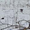 Winter Song (Sara Bareilles Cover)
