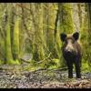 Vincetone ft. Les Inconnus (Trackn'Art Remix)