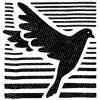 Schwarze Taube