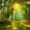 The Zen of all Summers