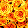 Guns And Roses(cover) - Lana Del Rey.
