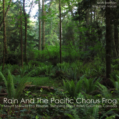 Saltspring Island Pacific Frog Chorus Mount Maxwell Rain