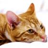 """Cat Music: """"Rusty's Ballad"""""""