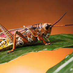 Cosmic Cricket