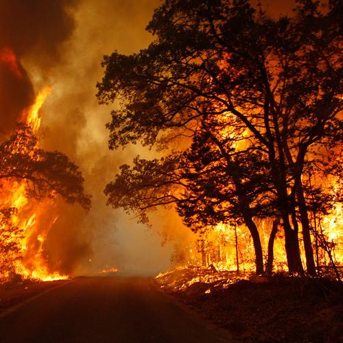 WILDFIRE!! - PHOENIX REMIX