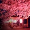 Sakura - さくら - Japanese Trap
