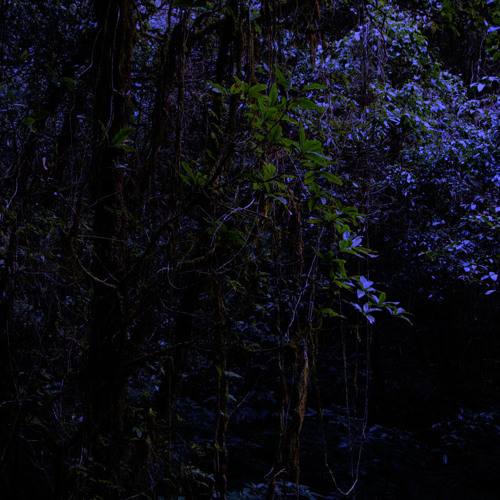 Evening in the Forest - Doi Inthanon NP, Thailand
