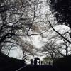 【適当に】桜流し Sakura Nagashi  歌ってみた (short cover)【「Evangelion 3.33」テーマ曲】
