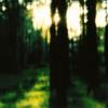 Murya - A Walk In A Forest Of Dreams