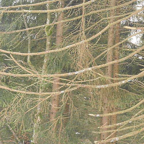Waldgeister01