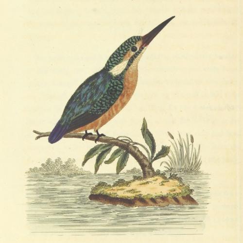 British Wildlife Recordings