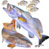 Le bocal de M. Redfish - Bruna Costa LA frA2+