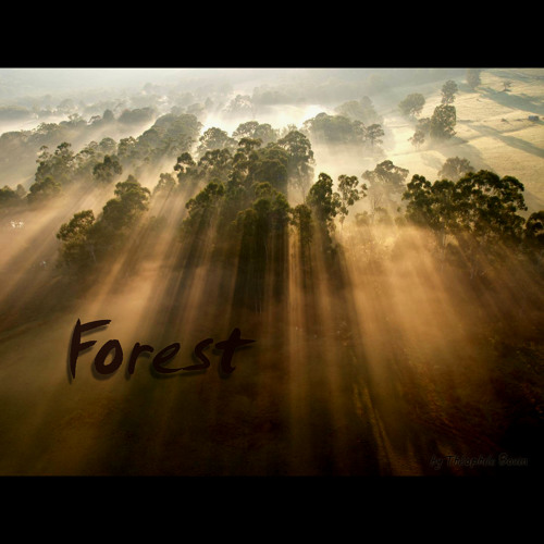 Forest V.2