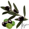 Episode 45: A Taste For Olives