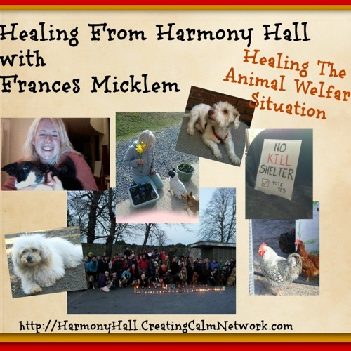 Healing from Harmony Hall with Frances Micklem - Healing the Animal Welfare Situation