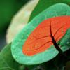 ami banglai gaan gai [আমি বাংলাই গান গায়] -Adct.recording