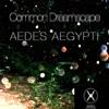 Common Dreamscape - Aedes Aegypti