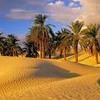 Arabic Music ( Instrumental )