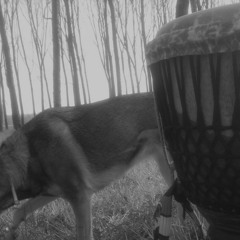 THIS IS MY AFRO TRIBAL DJEMBE BEATS 001
