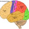 In The Brain by Jewel DelCastillo and Priscilla Rodriguez