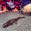 I'm A Slippery Amphibian