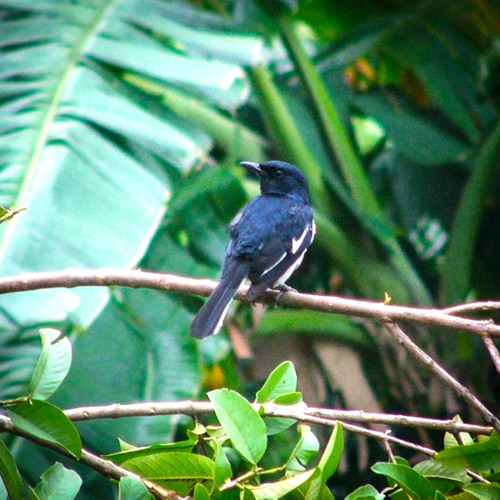 Mayapur Birds