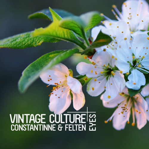 Thumbnail Vintage Culture Constantinne Felten Eyes Out Now