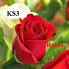 Roses - KS3