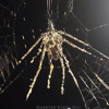The Night Of The Decoy Spider with Joe Hanson